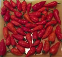 Fresh Ghost Pepper Pods 200 Pounds